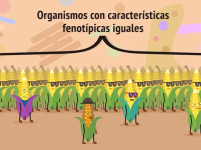 Understanding Genetically Modified Organisms
